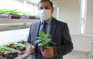 Akdeniz Üniversitesi Kovid-19'a karşı ilaç...