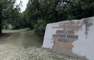 Türkiye'nin ilk 'fosil ormanının'...