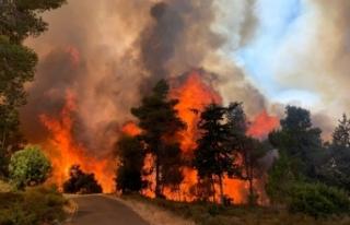 Kudüs'te çıkan yangında 2 bin 650 dönüm arazi...