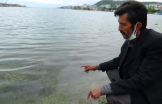 Marmara Denizi'ndeki müsilaj Karadenizli balıkçıları...