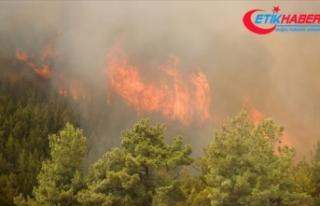 Bakan Pakdemirli Antalya'daki yangına müdahale...