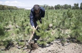 Doğu Anadolu'nun kıraç toprakları ve yanan...