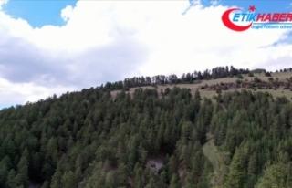 Eskişehir'de ormanlık alanlara girişlere 30...