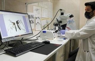 Asya kaplan sivrisineği ve diğer riskli türlerin...