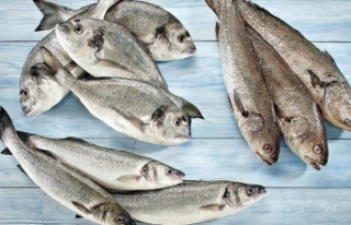Türkiye, su ürünleri ve hayvansal mamul ihracatında...