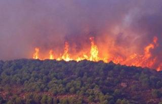 İzmir'deki makilik ve orman yangını söndürme...