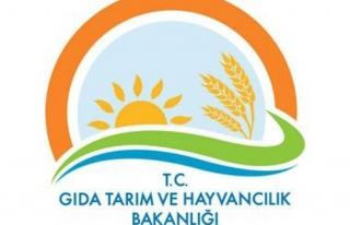 Gıda Tarım ve Hayvancılık Bakanlığında bin...
