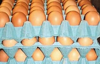 Danimarka'da 20 ton böcek ilaçlı yumurta piyasaya...
