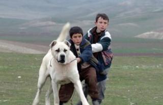 'Sivas' Oscar'a aday