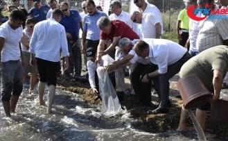 Muğla'da 180 bin yavru sazan göle bırakıldı
