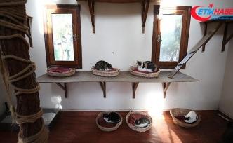 Kedilerin 'villa'da soba keyfi