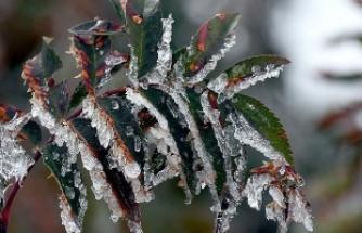 Meteorolojiden 5 il için zirai don uyarısı