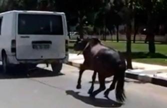 Atı minibüsün arkasına bağlayıp koşturdu