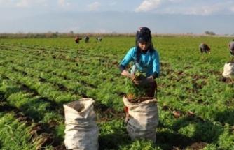 Bayraktar: Genç çiftçi desteği için son gün 30 Nisan