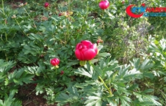 Bu çiçeği koparana 48 bin lira ceza