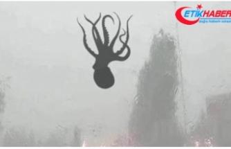 Çin'deki Şiddetli Fırtınada Gökten Ahtapot Yağdı!