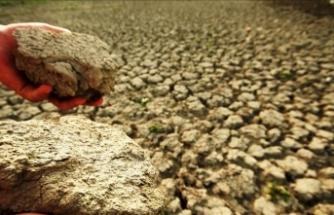 Cezayir'de aşırı sıcaklar kavuruyor