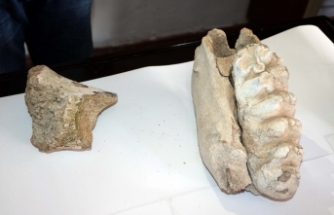 Yozgat'ta bulundu: En az 8 milyon yıllık olduğu sanılıyor