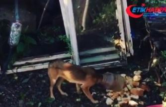 Başına sıkışan bidonla kaybolan köpek kurtarıldı