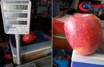 Bir elma tam 720 gram geldi
