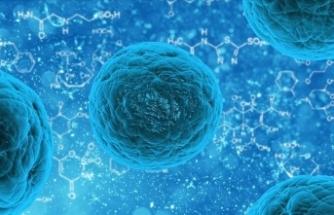 Vücuttaki yağlardan enzim kullanmadan kök hücre elde etti