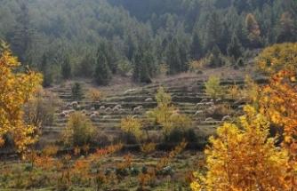 Hayvan yetiştiricisine 12 milyon hektarlık yeni otlatma alanı