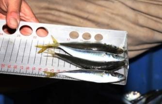 İstanbul'da 'balık boyu' denetimi