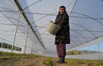 'Solucan gübresi' ev hanımının iş kapısı oldu