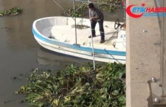 Asi Nehri'ni istila eden su canavarları temizleniyor