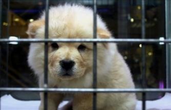 Evcil hayvanlar için örnek iş birliği