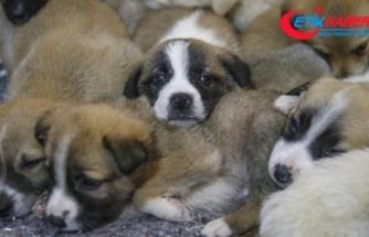 Bakan Pakdemirli: Hayvanlara yönelik şiddet suç kapsamına alınacak