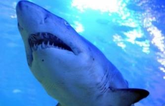 Avustralya'da sahilde sörf yapan kişi köpek balığı saldırısına uğradı