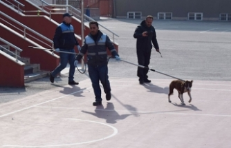 Çorum'da okula giren pitbull öğrencilere saldırdı: 2 yaralı