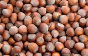 Fındık ihracatçılarından gelecek sezon rekor beklentisi