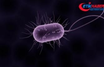 İngiltere'de bakteri 12 can aldı