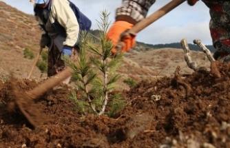 Sosyal medya kullanıcısının 'Ağaç Dikme Bayramı' önerisi