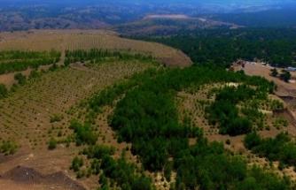 Eski maden sahaları milyonlarca ağaçla yeşile büründü