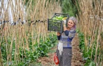 İyi Tarım ve Organik Tarım Destek Ödemeleri yarın başlıyor