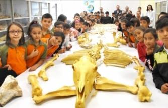 Anadolu tarihini milyon yıllık fosillerle öğreniyorlar