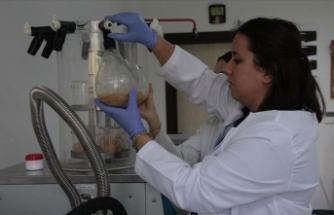 'Bacillus' adlı bakterinin pet ve naylonu parçalayabildiği belirlendi