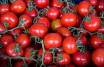 Batı Akdeniz'in ihracat şampiyonu 'domates' oldu