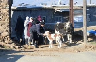 Depremden etkilenen Malatya'da yıkılan ahırlarda mahsur kalan hayvanları itfaiye ekipleri kurtardı