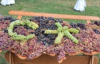 Milli Koleksiyon Bağı'nda 1439 yerli üzüm genotipi korumaya alındı