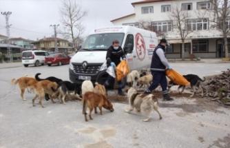 İBB, koronavirüs nedeniyle sahipsiz kalan hayvanlara mama dağıtıyor