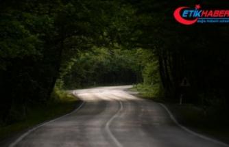 Safranbolu'nun ağaç tünelli yolu 'yolcularını' bekliyor