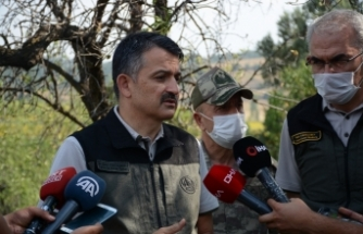 Bakan Pakdemirli: Çanakkale'deki orman yangını kontrol altına alındı