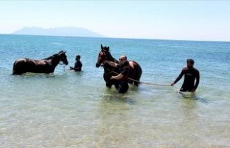 Şampiyon atlar Saros Körfezi'nde 'form' tutuyor