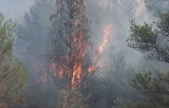 Sakarya'da orman yangını çıktı