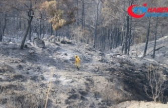 Hatay'daki orman yangınında soğutma çalışmaları tamamlandı