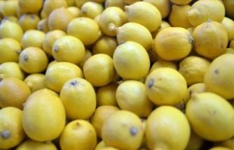 Limon ihracatı eylül ayında zirve yaptı